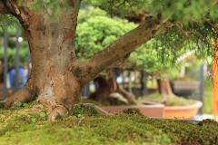 Baum-Bonsai-Garten-Stamm-Natur-Green