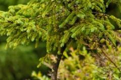 Baum-Gruen-Ökologie-Sommer-Wald-Pflanze-Farbe