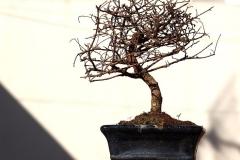 Bonsai-Baum-Blumentopf-Filialen-Herbst-Pflanze