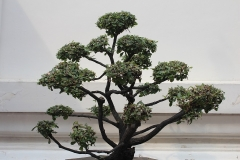 Bonsai-Baum-Dekoration-Topfpflanze-Bonsaibaum