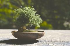 Bonsai-Baum-Frog-Pflanze-Tier-Sprung