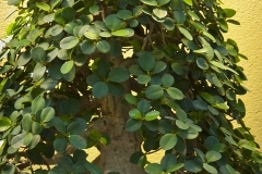 Bonsai-Baum-Garten-Miniatur-Zier-Topfpflanze
