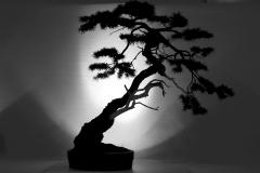 Bonsai-Baum-Gliederung-Silhouette-Japanisch-Kunst