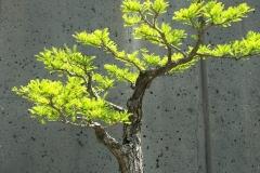 Bonsai-Baum-Klein-Wachstum-Stamm-Garten