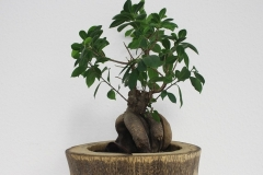 Bonsai-Baum-Office-Gruen-Pflanze-Wachsen-Natur