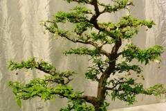 Bonsai-Baum-Pflanze-Klein-Topfpflanze-Baum