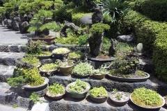 Bonsai-Jeju-Island-Bonsai-Botanischer-Garten-Garten