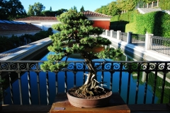 Bonsai-Madrid-Botanisch