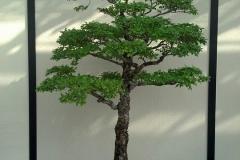 Bonsai-Miniatur-Baum-Gruen-Natur-Garten-Japanisch