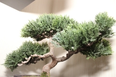Bonsaibaum-Bonsai-Baum-Klein-Bäumchen-Zierpflanze