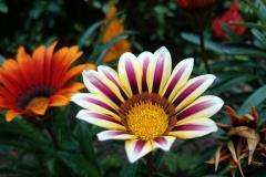 Blume-Exotische-Garten-Lila-Pflanze-Bunte