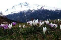 Blumen-Berg-Natur-Bramans-Heiliger-Stein-Extravache