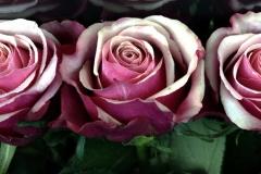 3-rosen-1