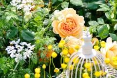 Gelbe Rose im Garten