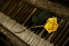 rose-romantisch-vintage