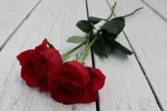 zwei-rote-rosen-1