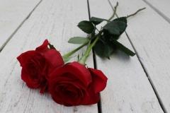 Zwei rote Rosen für die Liebe