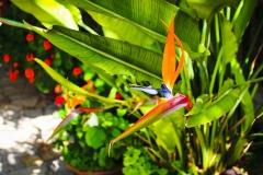 Paradiesvogelblume-Blume-Bluete-Exotisch
