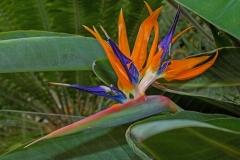 Paradiesvogelblume-Blume-Gruen-Bluete-Flora-Natur