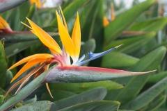 Paradiesvogelblume-Blume-Gruen-Pflanze-Natur-Bluete