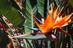 Strelizie-Blume-Bluete-Nahaufnahme-Orange