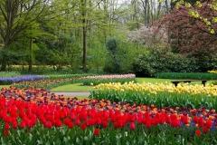 Bluete-Bäume-Farbe-Bunte-Gruen-Flora-Blume-Garten