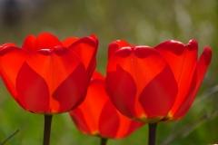Blume-Blumen-Natur-Pflanze-Fruehling-Bluete