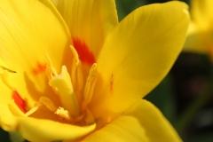 Blume-Gelb-Gelbe-Blumen-Natur-Fruehling-Sommer