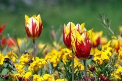 Blume-Pflanze-Garten-Fruehling-Blatt-Gruen-Natur