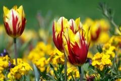 Blume-Pflanze-Garten-Fruehling-Blatt-Gruen-Natur1