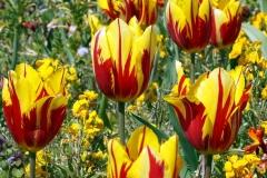 Blume-Pflanze-Garten-Fruehling-Blatt-Gruen-Natur4