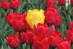 Blume-Tulpe-Zentrum-Team