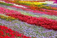 Blumen-Beet-Garten-Bluehen-Park-Blueten-Pflanzen1
