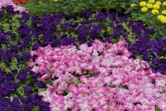 Blumen-Beet-Garten-Bluehen-Park-Blueten-Pflanzen2