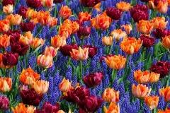 Blumen-Blume-Bett-Bluete-Hintergrund-Farbe-Bunte