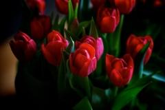 Blumen-Blumenstrauss-Tulpen-Strauß-Fruehling