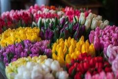 Blumen-Bunte-Tulpen-Dekoration-Farbe