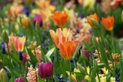 Blumen-Fruehling-Tulpe-Natur-Bluete-Gruen-Pflanze2