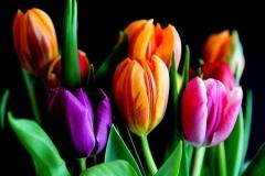 Blumen-Tulpen-Blueten-Blumenstrauß-Schnittblumen