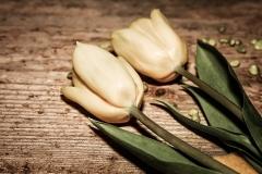 Blumen-Tulpen-Gelb-Gelbe-Blume-Schnittblume