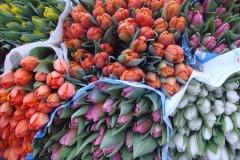 Blumen-Tulpen-Strauß-Fruehling