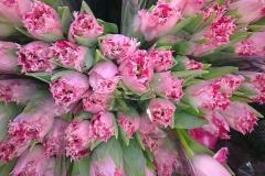 Blumengesteck-Tulpe-Fruehling-Blumen-Rosa