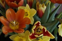 Blumenstrauß-Fruehling-Strauß-Tulpen-Osterglocken