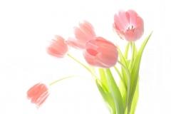 Blumenstrauß-Tulpen-Pflanzen-Blumen-Pflanze